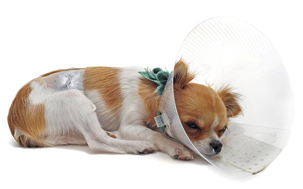стерилизация или кастрация собаки что лучше